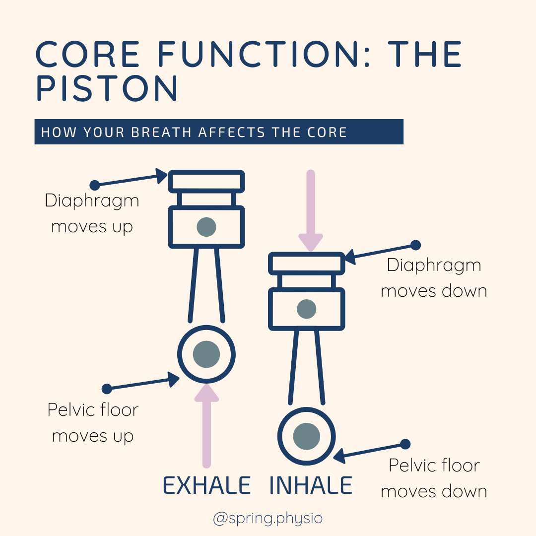 anatomy Core muscles piston
